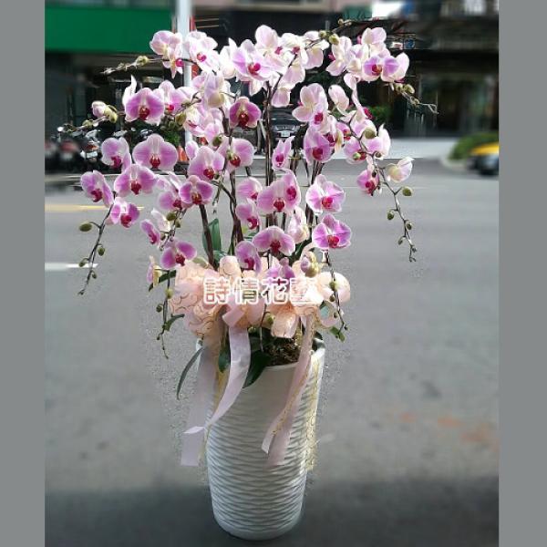 E058高雅蘭花祝賀蘭花喜慶蘭花開幕喬遷盆栽