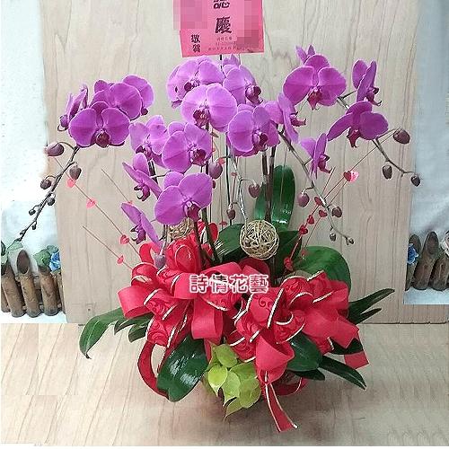 E070高雅蘭花祝賀蘭花喜慶蘭花開幕喬遷盆栽