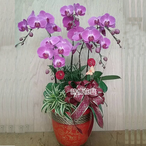 E077高雅蘭花祝賀蘭花喜慶蘭花開幕喬遷盆栽