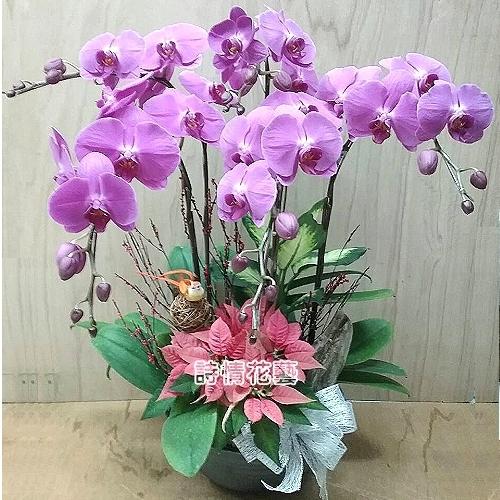 E080高雅蘭花祝賀蘭花喜慶蘭花開幕喬遷盆栽