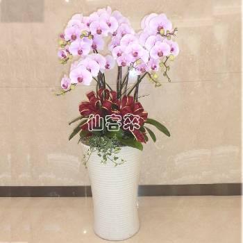 【O-1001】蝴蝶蘭組合盆栽開幕落成賀禮、喬遷、祝賀盆栽
