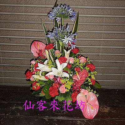 【A-303】母親節盆花寵愛媽咪康乃馨盆花感恩盆花