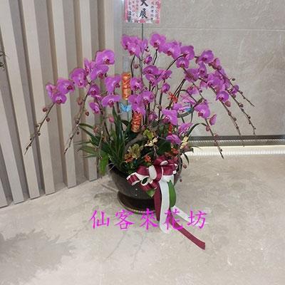 【O-614】蘭花盆栽:蝴蝶蘭組合盆栽,開幕落成賀禮、喬遷、祝賀盆栽