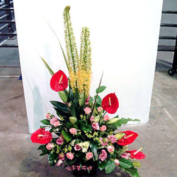 【A-127】花店精選:盆花-駿業日新
