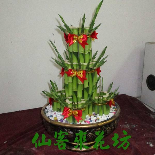 【L-102】開運竹,開運盆栽-幸運竹-室內盆栽-桌上型盆栽