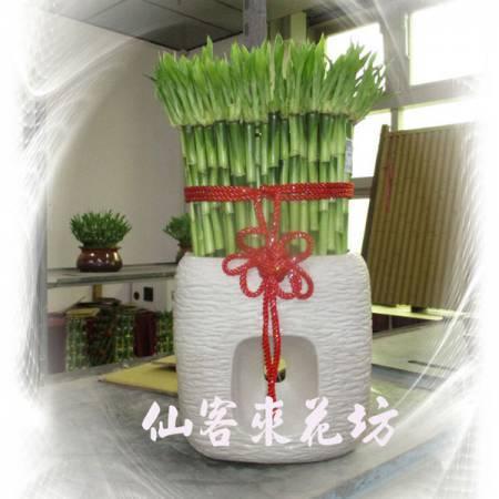 【L-161】開運竹,開運盆栽-幸運竹-室內盆栽-桌上型盆栽