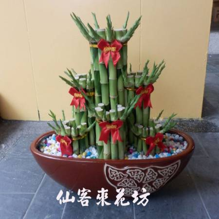【L-111】開運竹,開運盆栽-幸運竹-室內盆栽-桌上型盆栽