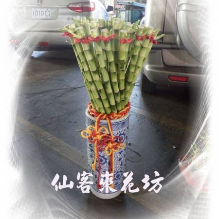 【L-112】開運竹,開運盆栽-幸運竹-室內盆栽-桌上型盆栽