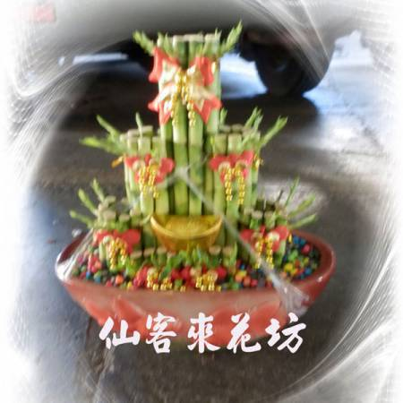 【L-114】開運竹,開運盆栽-幸運竹-室內盆栽-桌上型盆栽