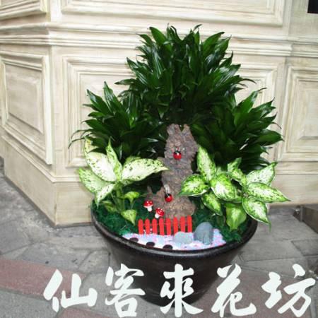 【P-113】阿波羅組合盆栽桌上型,開運盆栽-室內盆栽-桌上型盆栽