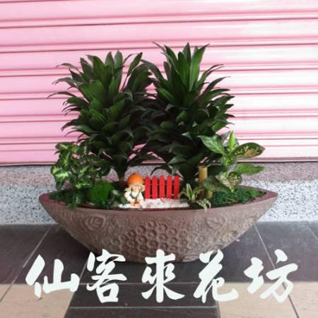 【P-112】阿波羅組合盆栽桌上型,開運盆栽-室內盆栽-桌上型盆栽