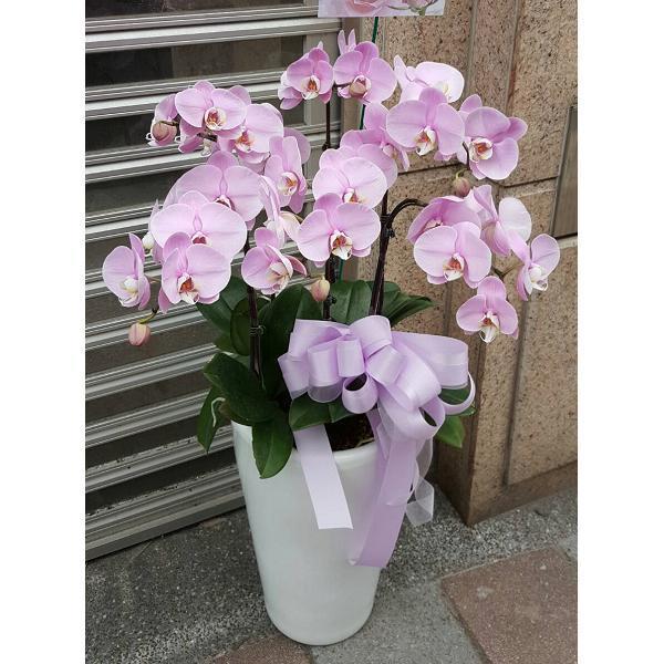 D002蘭花盆栽-6株