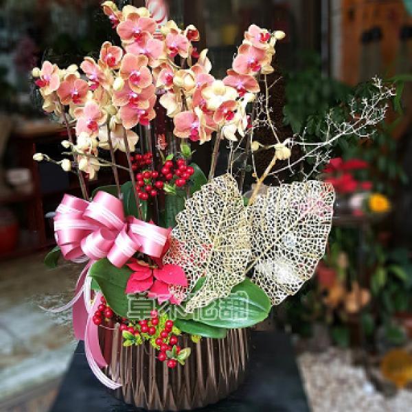 D003祝賀蘭花盆栽-8株