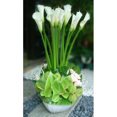 C021精緻盆花喜慶會場佈置盆花