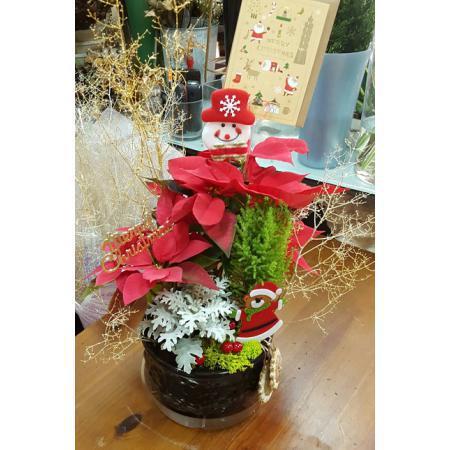 AE001聖誕組合盆栽