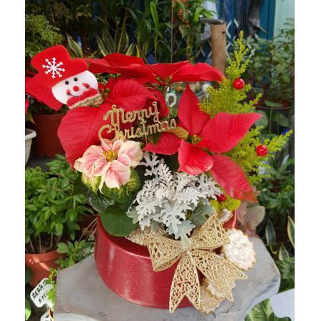 AE002聖誕組合盆栽
