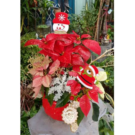 AE003聖誕組合盆栽
