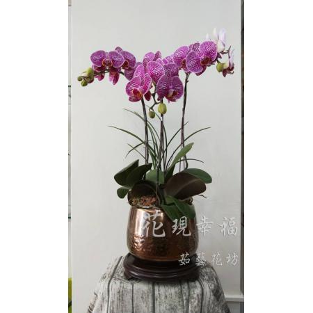 RZ001高雅蘭花組合盆栽