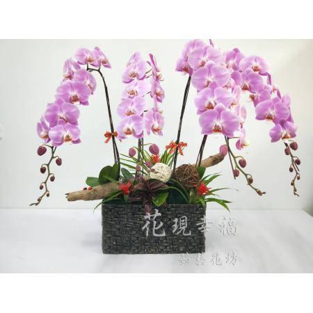 RZ002快樂蘭花高雅組合盆栽