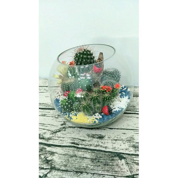 ZU005仙人掌們的玻璃球