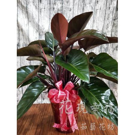 SI001紅鑽賺起來開幕禮盆栽