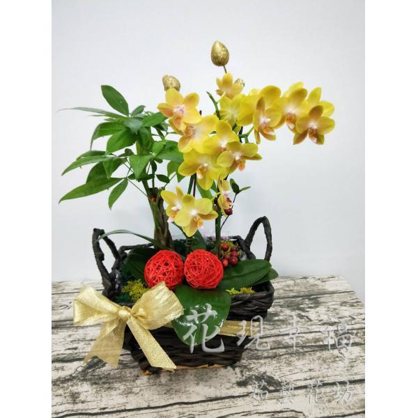 RZ008發財金黃蛋蘭花組合盆栽