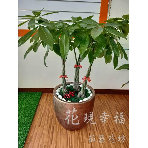 SI005金大發落地盆栽
