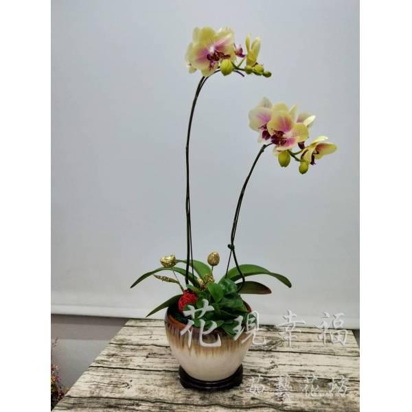 RZ014[祥花獻瑞]蘭花組合盆栽