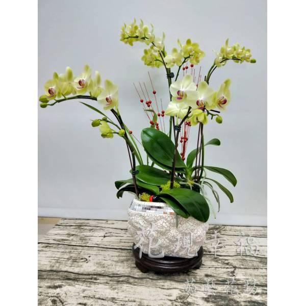 RZ016[綠意盎然]蘭花組合盆栽