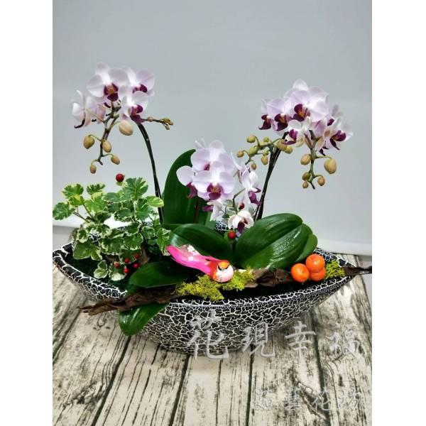 RZ019[滿載而歸]蘭花組盆