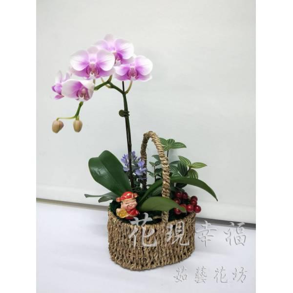 RZ022蘭花小組盆