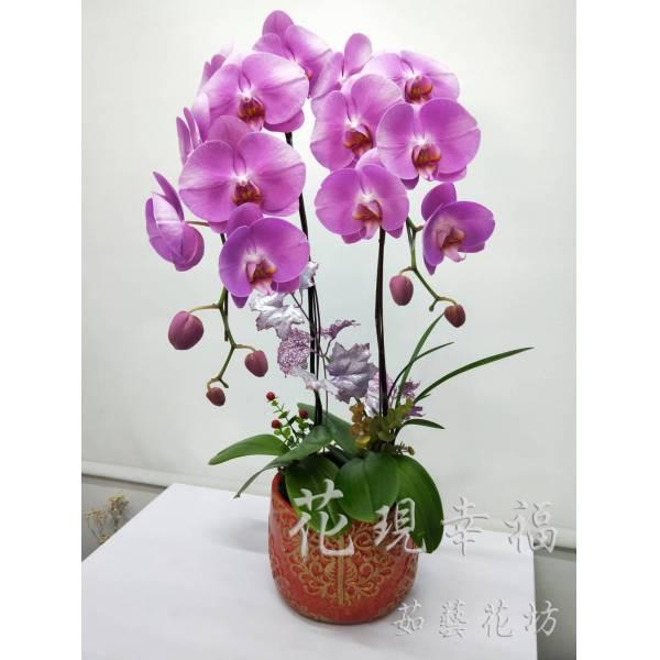 RZ023蘭花組盆