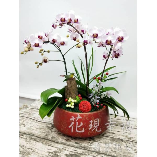 RZ025蘭花組盆
