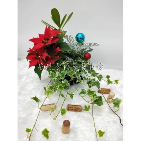 ZU028聖誕組合苔球