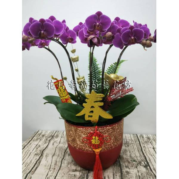 RZ025迎春新春蘭花組盆