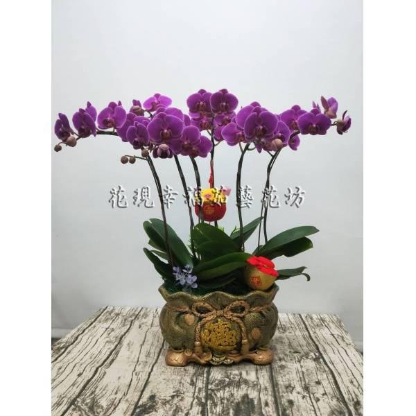 RZ026招財進寶新春蘭花組盆