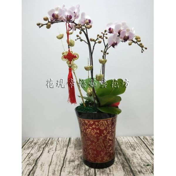 RZ027雙喜臨門新春蘭花組盆