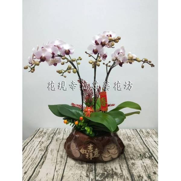 RZ029吉祥如意新春蘭花組盆