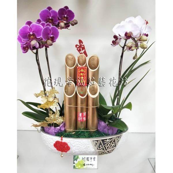 RZ032竹報平安新春蘭花組盆