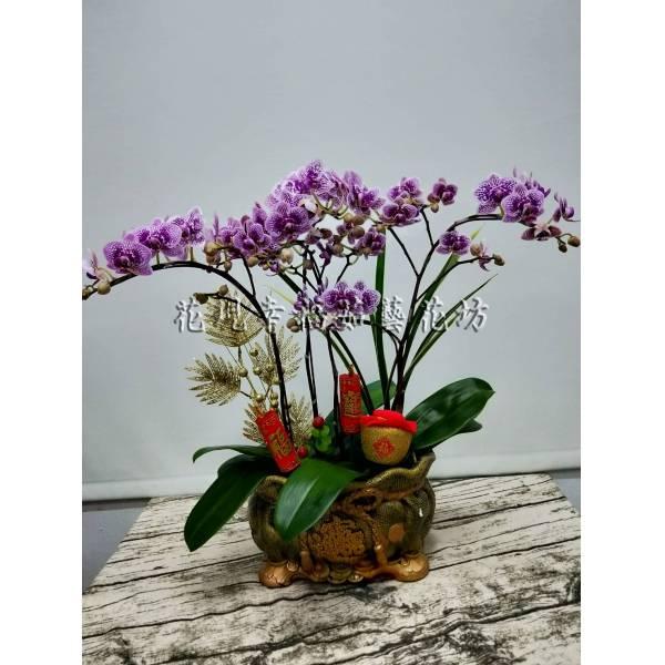 RZ035蘭花組盆