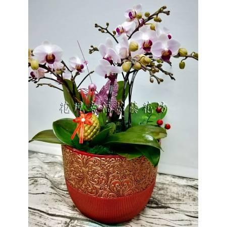 RZ039蘭花組合盆栽