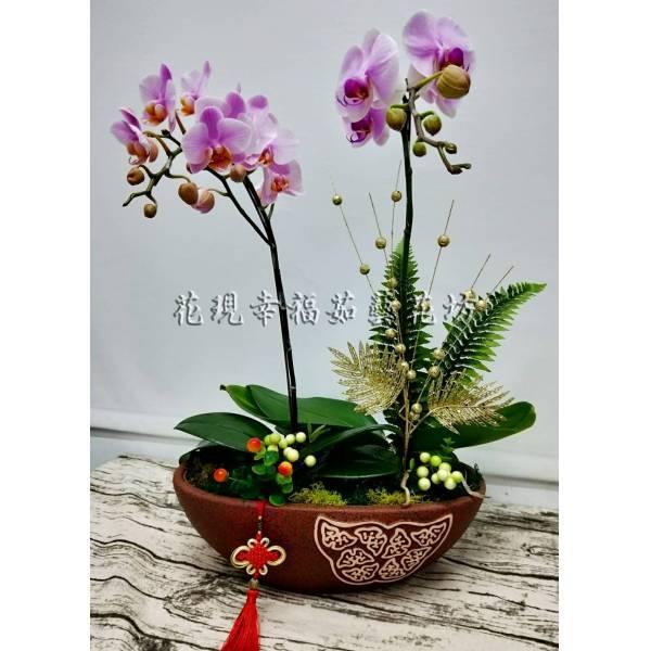RZ040蘭花組盆