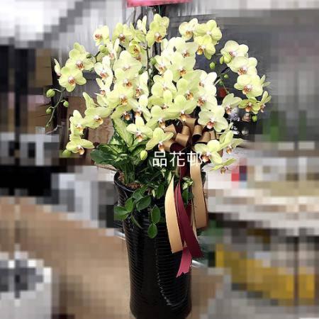 E002祝賀蘭花-10株