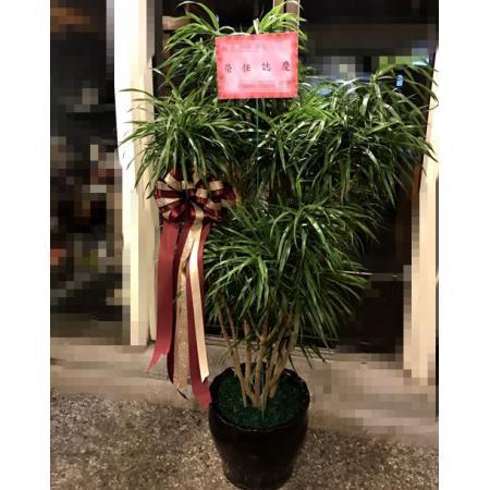 G003百合竹盆栽