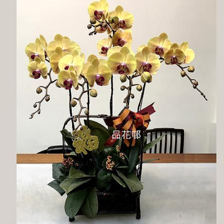 F002祝賀蘭花-5株