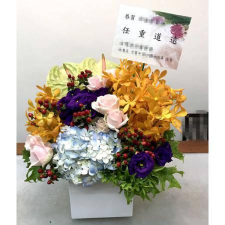 C008祝賀盆花開幕喜慶會場盆花時尚盆花