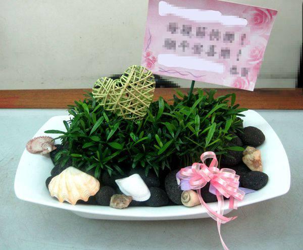 H005羅漢松組合盆栽