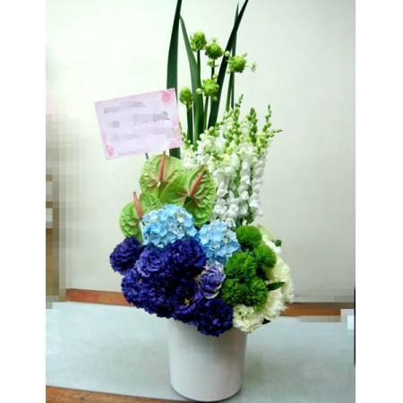 C0010祝賀盆花開幕喜慶會場盆花時尚盆花