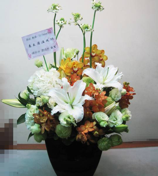 C0015祝賀盆花開幕喜慶會場盆花