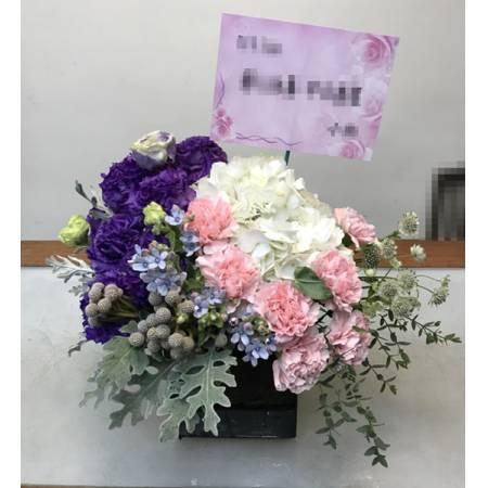C0017祝賀盆花開幕喜慶會場盆花